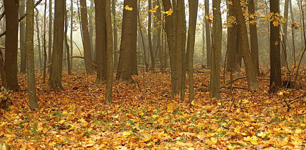 S&D-Landscapes-Autmn-Leaves